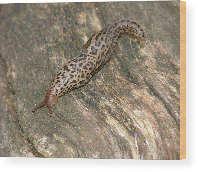 Slug Wood Print featuring the photograph Mr Slug by Dennis Pintoski