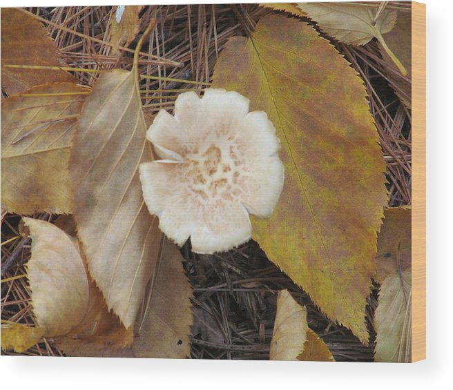 Nature Wood Print featuring the photograph Mushroom And Autumn Leaves by Loretta Pokorny