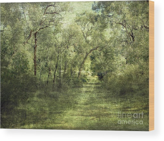 Outback Wood Print featuring the photograph Outback Bush by Linde Townsend