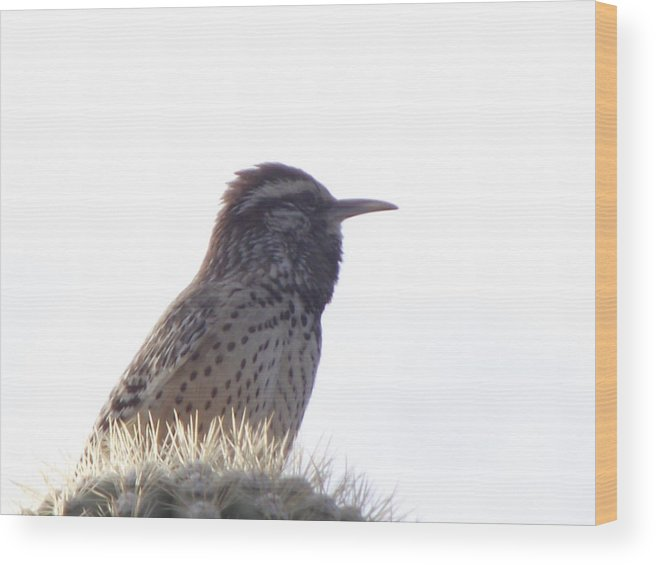 Bird Wood Print featuring the photograph Perched On A Cactus by Jayne Kerr