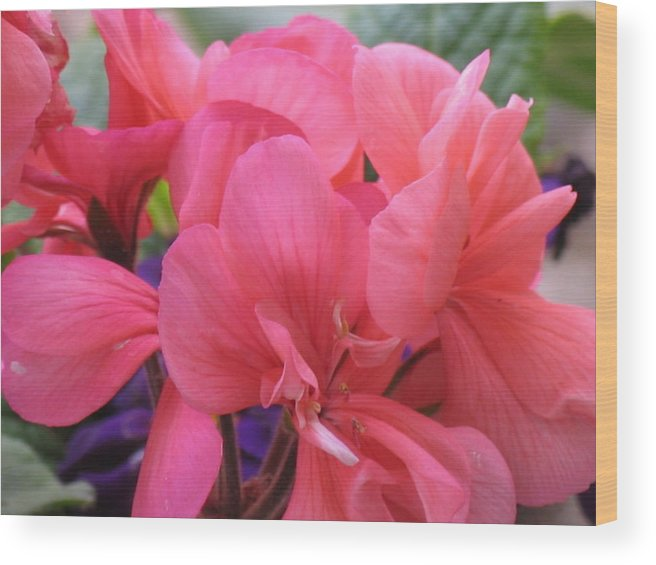 Pink Flowers Wood Print featuring the photograph Pink Flowers by Chrisse Hartley