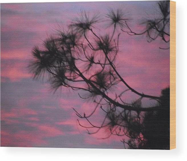 Tree Wood Print featuring the photograph Pink 'n' Purple Sky by Rani De Leeuw