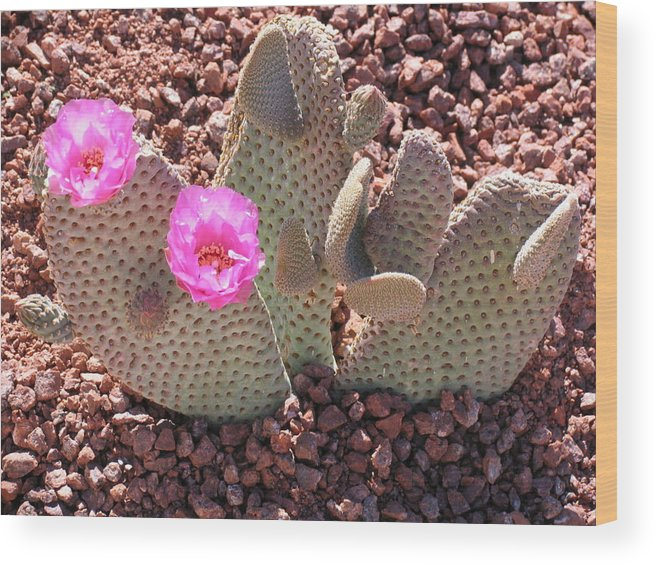 Cactus Wood Print featuring the photograph Prickly Pear Cactus by Chrisse Hartley