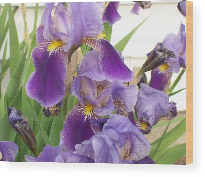 Flower Wood Print featuring the photograph Purple Iris by Corinne Elizabeth Cowherd
