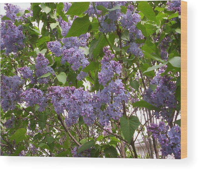 Flower Wood Print featuring the photograph Purple Lilacs by Corinne Elizabeth Cowherd