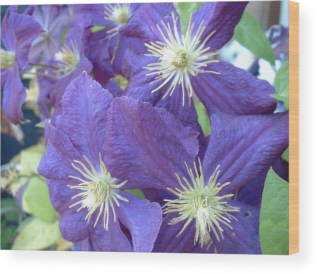 Flower Wood Print featuring the photograph Purple Whiskers by Paul Slebodnick