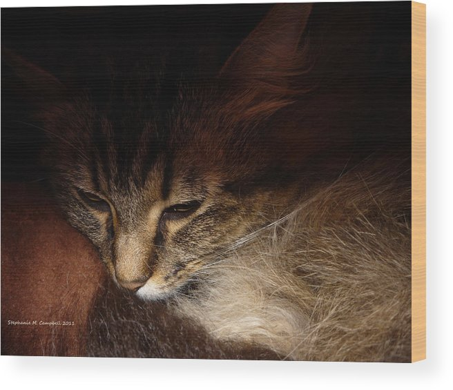Main Coon Wood Print featuring the photograph Ready For A Cat Nap by Stephanie Campbell