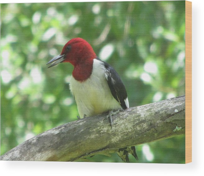 Wood Pecker Wood Print featuring the photograph Red Head by Marjorie Smith