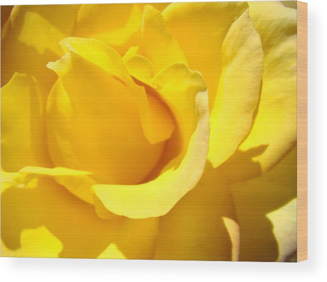 Rose Wood Print featuring the photograph Rose Petal Flower Yellow Colorful Rose Floral Baslee by Baslee Troutman