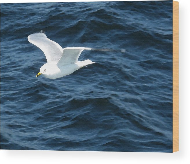Nature Wood Print featuring the photograph Seagull Flying Over The Waves Wc by Lyle Crump