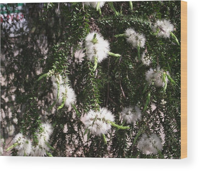 Flower Wood Print featuring the photograph Snowflakes by Rani De Leeuw