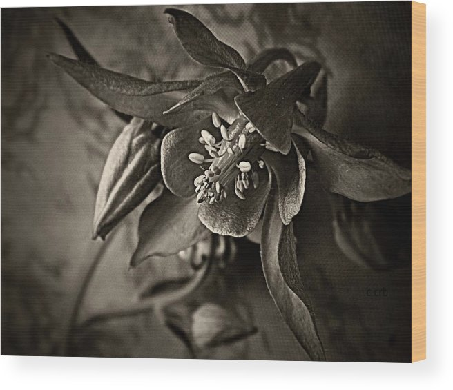 Wood Print featuring the photograph Spring Columbine by Chris Berry