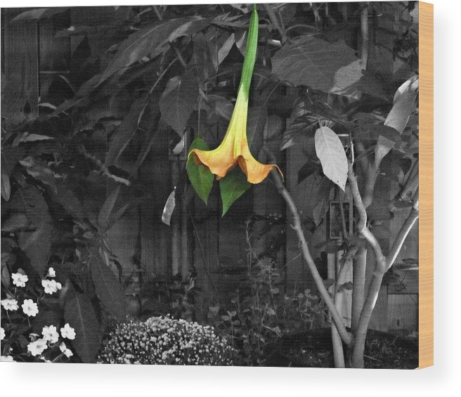 Flowers Wood Print featuring the photograph Standout by Leah Osborne