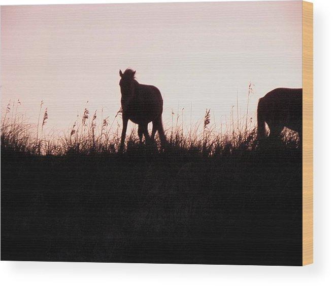 Wild Wood Print featuring the photograph Sunset Wildness by Kim Galluzzo Wozniak