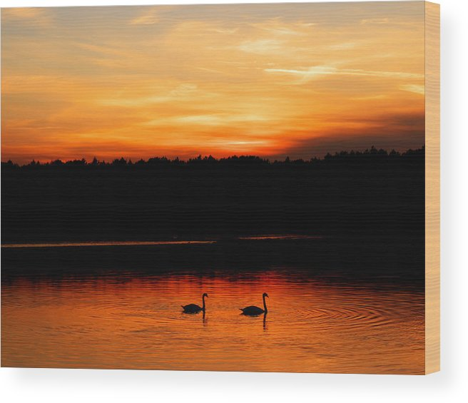Swan Wood Print featuring the photograph Swans In The Sunset by Ivan Slosar