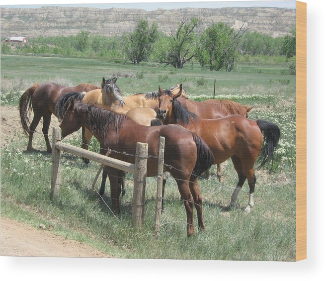 Horse Wood Print featuring the photograph The Gathering by Wayne Toutaint