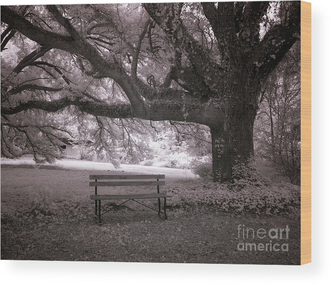 The Lonely Bench Wood Print featuring the photograph The Lonely Bench by Heinz G Mielke