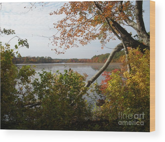 Landscape Wood Print featuring the photograph Thru The Trees by Tracy Fusco