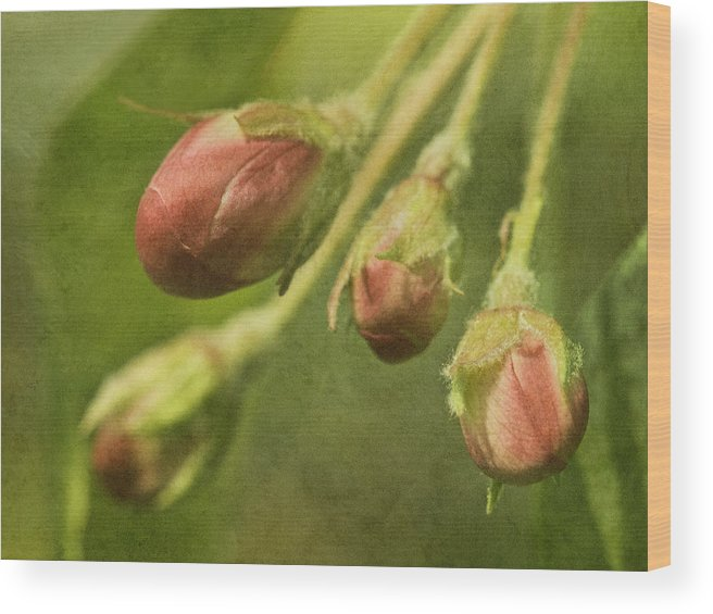 Spring Wood Print featuring the photograph Tightly Formed by Cheryl Butler