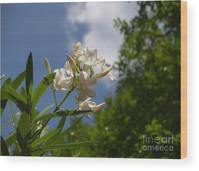 Flower Wood Print featuring the photograph To The Heavens by Kayla Swaim