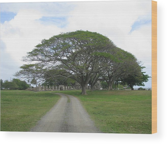 Tree Wood Print featuring the photograph Tree Over Ruins by Anthony Trillo