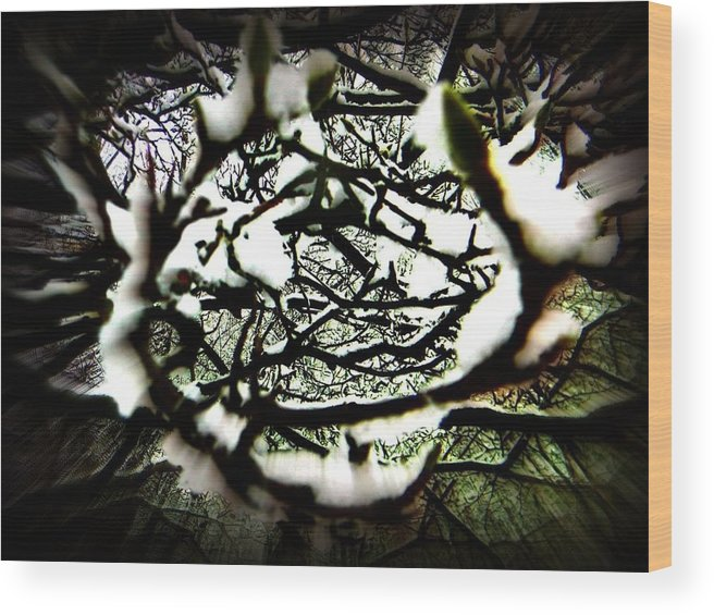 Tree Wood Print featuring the photograph Tunnel Vision by Stacy Dunlap