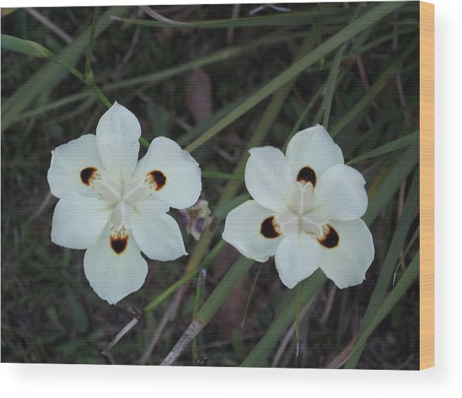 Flowers Wood Print featuring the photograph Twins by Rani De Leeuw