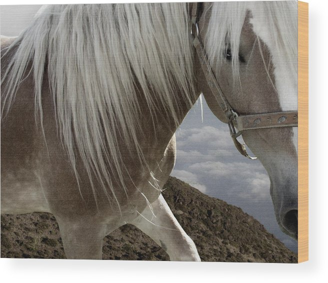 Haflinger Wood Print featuring the photograph Walking On The Moon by Maggie Dee