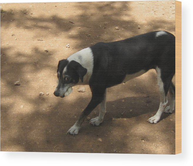 Animals Wood Print featuring the photograph What Do You Want by Joao Ramos