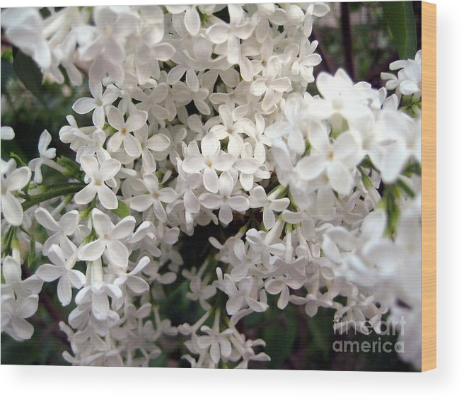 White Wood Print featuring the photograph White Lilacs by Susan Carella