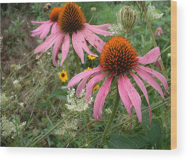Flower Wood Print featuring the photograph Wild Garden by Paul Slebodnick