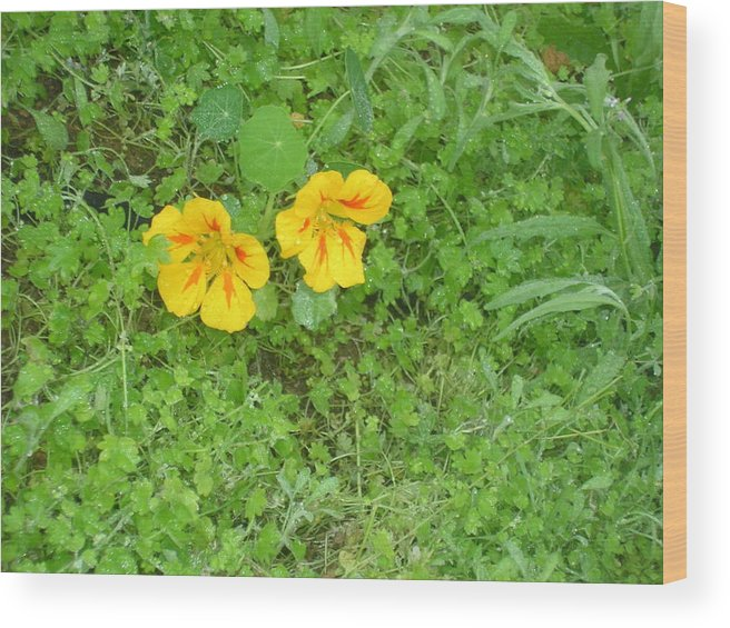 Yellow Flowers Wood Print featuring the photograph Yellow Couplet by Jayne Kerr