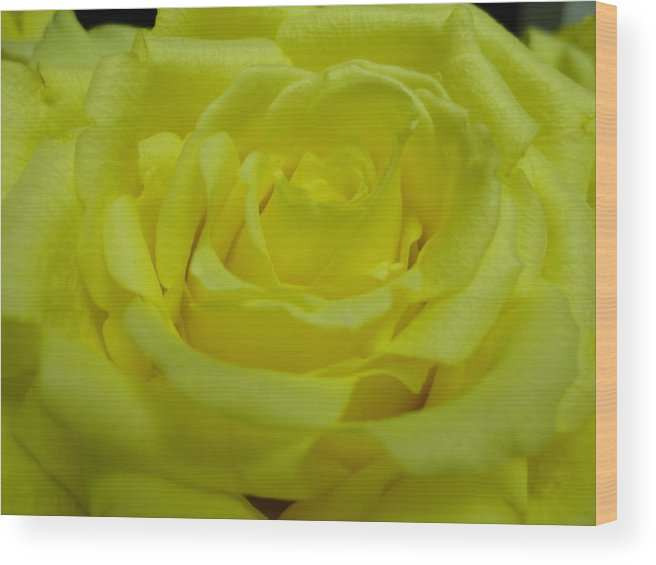 Flower Wood Print featuring the photograph Yellow Rose Of Texas by Maria Bonnier-Perez