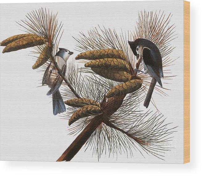 1838 Wood Print featuring the photograph Audubon: Titmouse by Granger