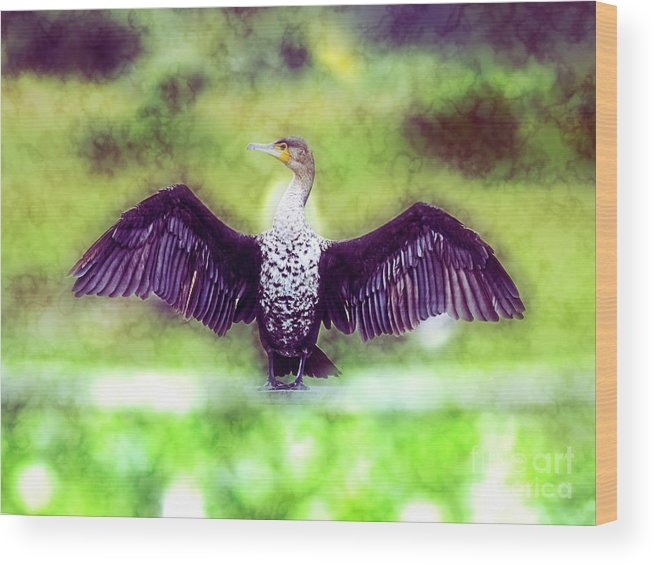 White Breasted Wood Print featuring the photograph Cormorant Dries Its Wings by Humorous Quotes