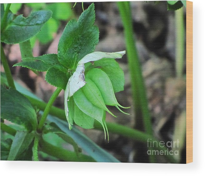 Nature Wood Print featuring the photograph Flower by Sean Griffin