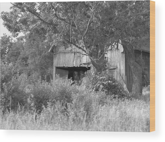 Country Wood Print featuring the photograph Hidden by Rhonda Barrett