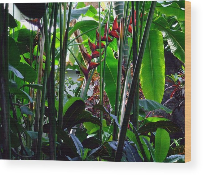 Jungle Wood Print featuring the photograph Jungle Fever by Mindy Newman