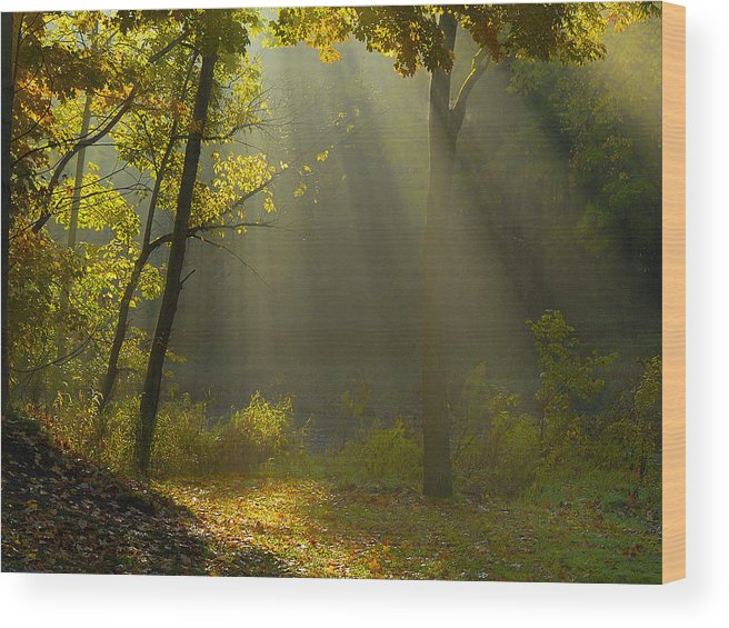 Sun Rays Wood Print featuring the photograph Mystic Morning by Neil Doren