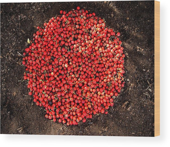 Red Berries Wood Print featuring the photograph Organize Red Berries by Lizzie Johnson