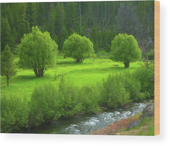 Stanley Basin Wood Print featuring the photograph Shades Of Green by Dan Dixon