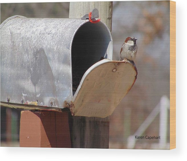 Bird Wood Print featuring the photograph Waiting by Karen Capehart