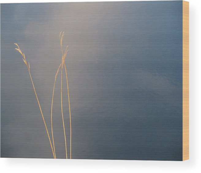 Abstract Wood Print featuring the photograph Water by Sidsel Genee