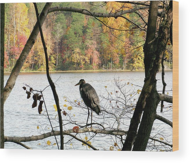 Birds Wood Print featuring the photograph 2006-heron Fall2009 by Martha Abell