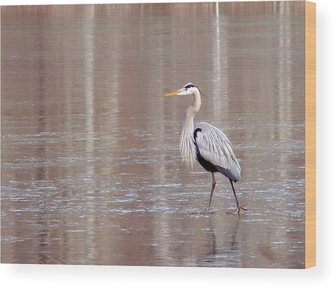 Birds Wood Print featuring the photograph 2007-heron On Ice Feb 2011 by Martha Abell