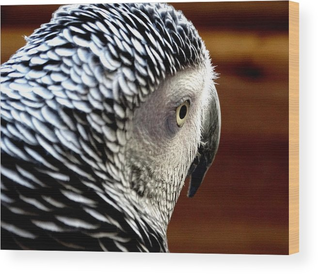 Africa Grey Parrot Wood Print featuring the photograph African Grey Parrot by Ines Ganteaume