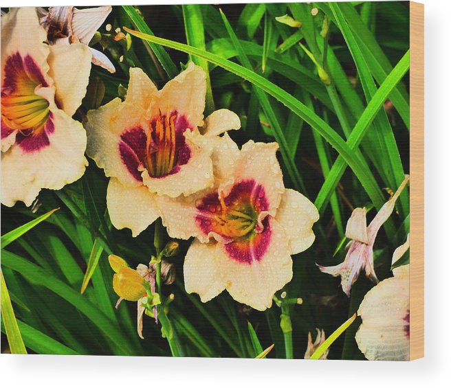 Idaho Spring Flowers Gardens Floral Paul Stanner Wood Print featuring the photograph Caravan Of Dreams by Paul Stanner