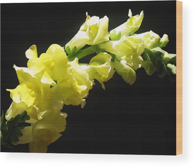 Floral Photos Wood Print featuring the photograph Nature Series by Ginger Geftakys