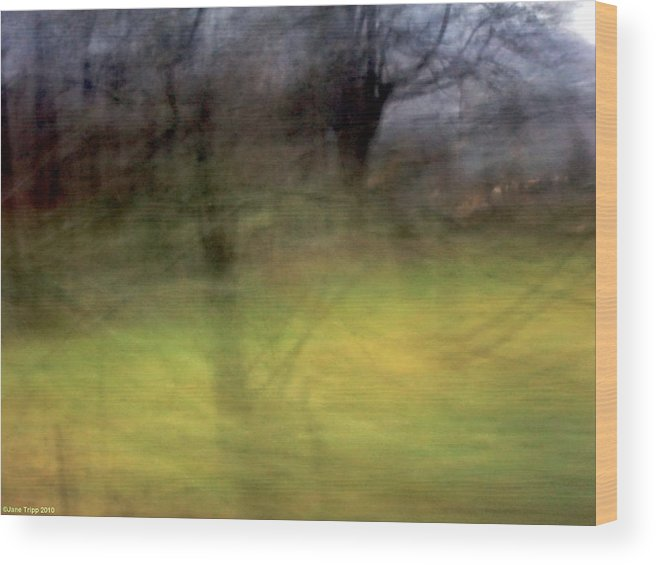 Wood Print featuring the photograph A Day For Memories by Jane Tripp