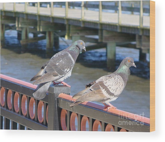 Bird Wood Print featuring the photograph A Pair by Stephanie Richards